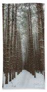 Forest In Sleeping Bear Dunes In January Beach Towel