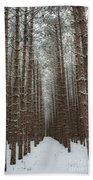 Forest In Sleeping Bear Dunes In January Beach Towel