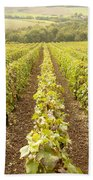 French Vineyards Of The Champagne Region Beach Towel