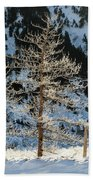 Frost Covered Trees On The Portage Glacier Highway Alaska Beach Towel