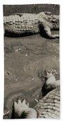 Gator  Park Residence Beach Towel