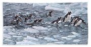 Gentoo Penguins By Alan M Hunt Beach Towel