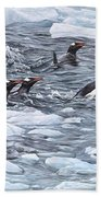 Gentoo Penguins By Alan M Hunt Beach Sheet