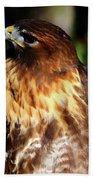 Golden Eagle Portrait Beach Towel