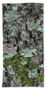 Gray Treefrog - 8522-2 Beach Towel