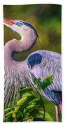 Great Blue In Mating Plumage Beach Towel by Tom Claud