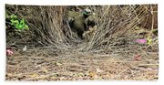 Great Bowerbird With Nut Beach Towel