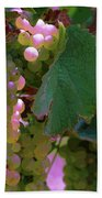 Green Grapes On The Vine 12 Beach Towel