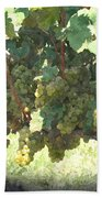 Green Grapes On The Vine 17 Beach Towel