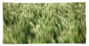Green Growing Wheat Beach Towel