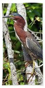 Green Heron In The Glades Beach Towel