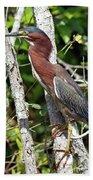 Green Heron In The Glades Beach Sheet