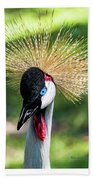 Grey Crowned Crane Gulf Shores Al Collage 2 Triptych Beach Towel