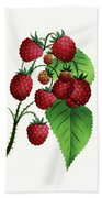 Hepstine Raspberries Hanging From A Branch Beach Towel