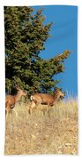 Herd Of Colorado Deer Beach Towel