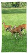 Herd Of Deer Beach Towel