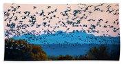 Herd Of Snow Geese In Flight, Soccoro Beach Sheet