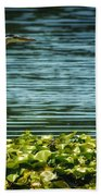 Heron In The Lily Pads Beach Towel
