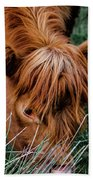 Highland Cow Eating Close Up Beach Towel by Scott Lyons