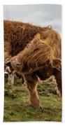 Highland Cow Having A Scratch Beach Towel by Scott Lyons