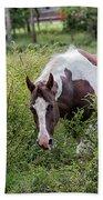 Horse Print 578 Beach Towel