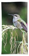 Hummingbird 105 Beach Towel