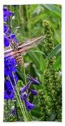 Hummingbird Moth And Larkspur Beach Towel by Dawn Richards
