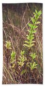 In Tall Grass Beach Towel by Whitney Goodey
