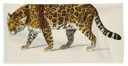 Jaguar  Panthera Onca  Illustrated By Charles Dessalines D' Orbigny  1806-1876  Beach Towel