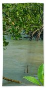 Kingfisher In The Mangroves Beach Towel