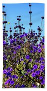 Lavender Blooms  Beach Towel