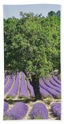 Lavender Field And Tree Beach Sheet