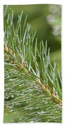 Moist Pine Tree Leaves With Water Droplets. Beach Towel