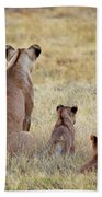 Mom And Cubs Beach Towel by John Rodrigues