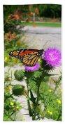 Monarch Butterfly Danaus Plexippus On A Thistle Beach Towel