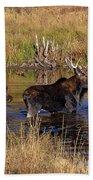 Moose At Green Pond Beach Towel