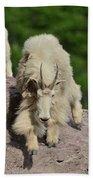 Mountain Goats- Nanny And Kid Beach Towel