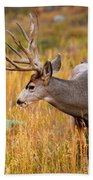 Mule Deer Buck In Rocky Mountain National Park Beach Towel