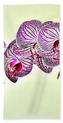 Naturalness And Flowers 37 Beach Towel