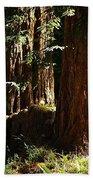 New Growth Redwoods Beach Towel