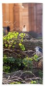 Night Heron At The Palace Beach Towel by Kate Brown