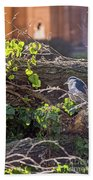 Night Heron At The Palace Revisited Beach Towel by Kate Brown