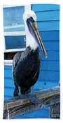Oceanside Pelican Right  Beach Towel