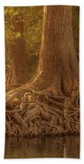 Old Cypress Tree Roots Beach Towel