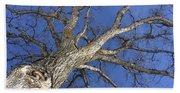Old Oak Tree Beach Sheet