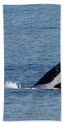 One Orca Leaping Beach Sheet