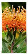 Orange Protea Beach Towel