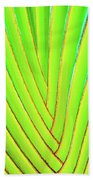 Palms And Fronds - Hawaii Beach Towel