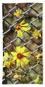 Phoenix Arizona Papago Park Blue Sky Red Rocks Scrub Vegetation Yellow Flowers 3182019 5327 Beach Sheet
