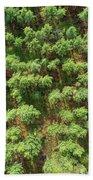 Pine Rows Aerial 2x1 Beach Towel